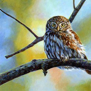 n-pygmy-owl