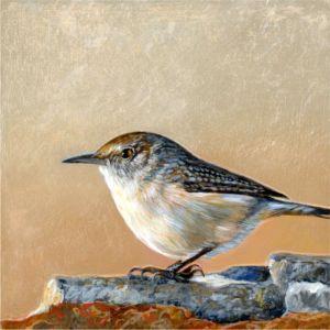 rock-wren