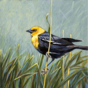 y-h-blackbird
