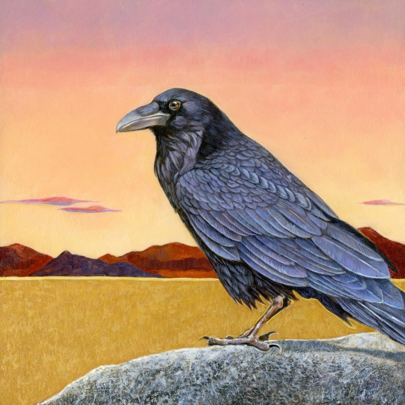 raven-at-black-rock
